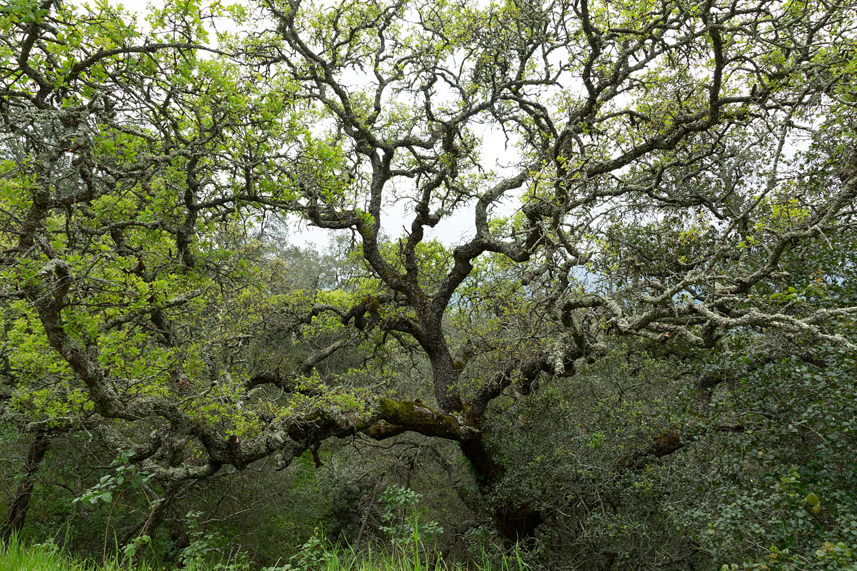 mount diablo state park pine canyon-22.jpg