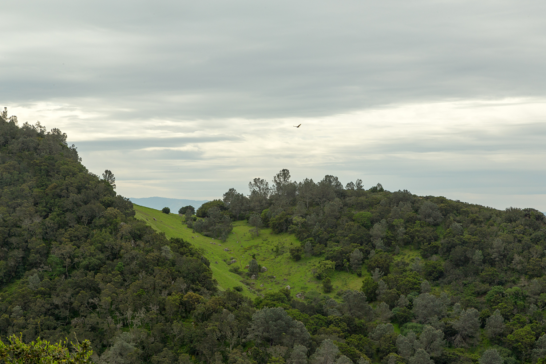 mount diablo state park pine canyon-24.jpg