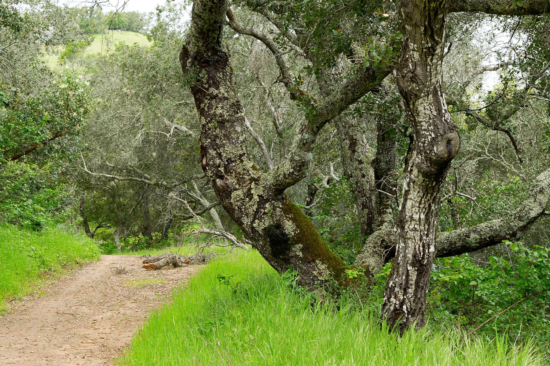 mount diablo state park pine canyon-25.jpg