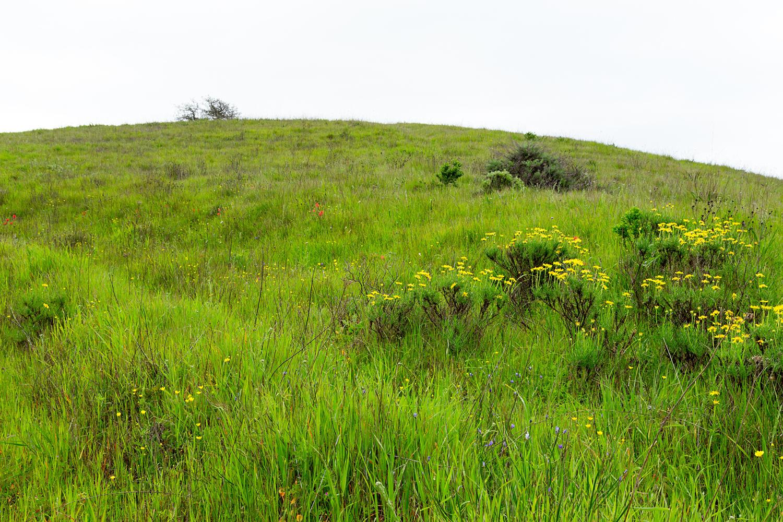 mount diablo state park pine canyon-28.jpg