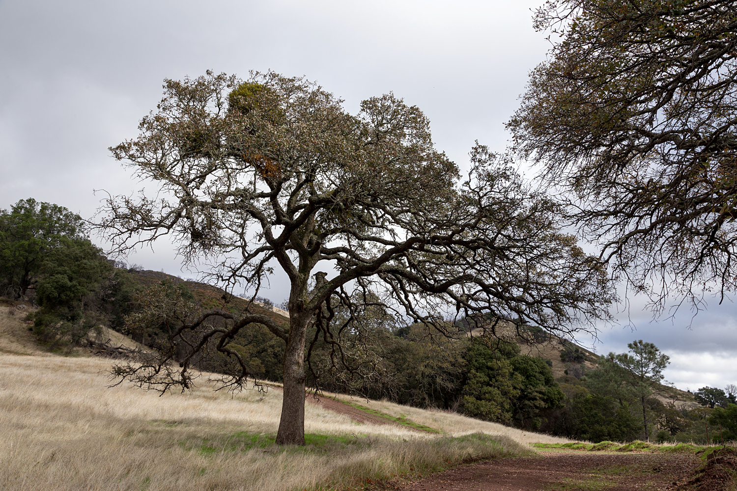 Mount Diablo State Park Curry Canyon Chase Pond Frog Pond-3.jpg