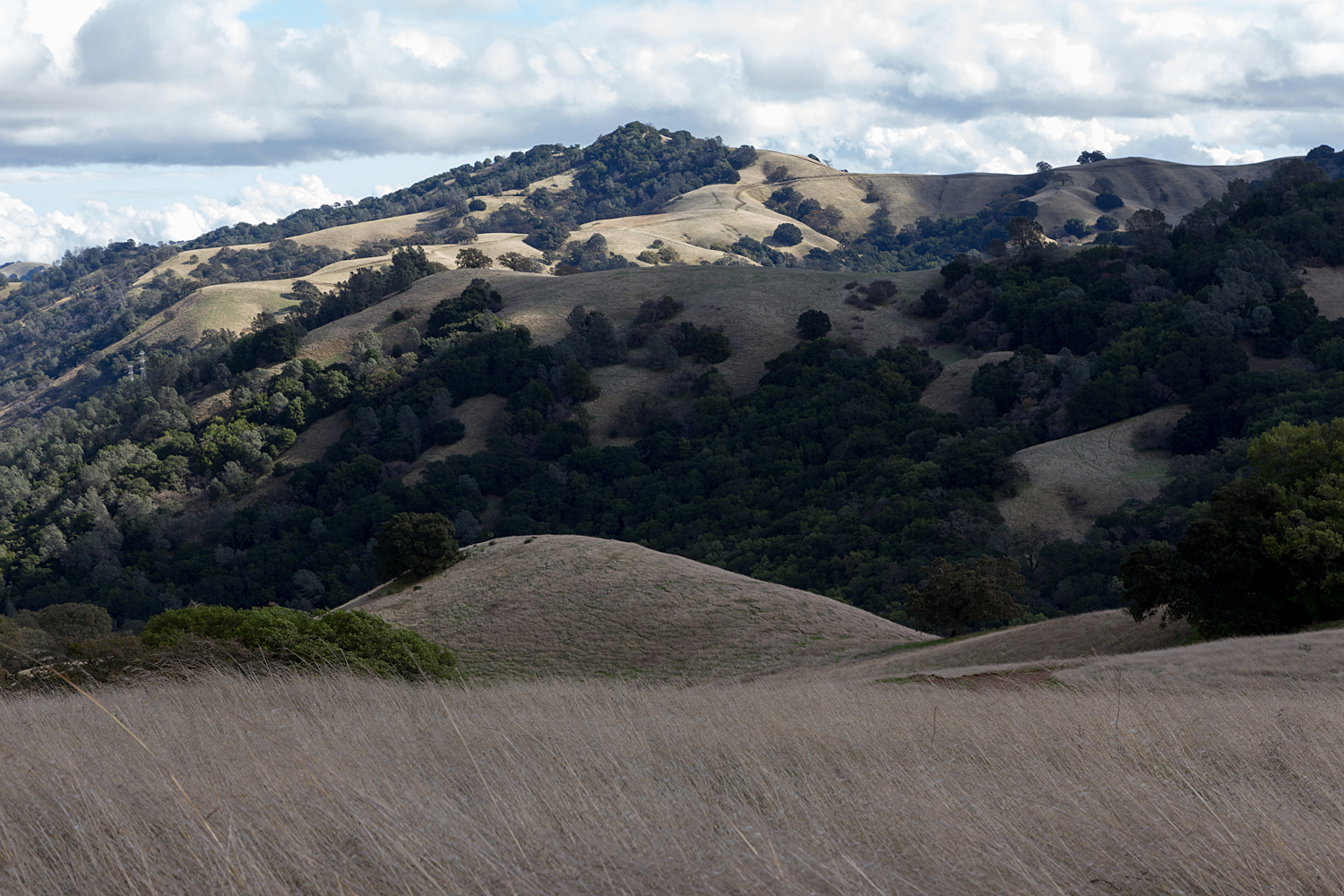 Mount Diablo State Park Curry Canyon Chase Pond Frog Pond-15.jpg