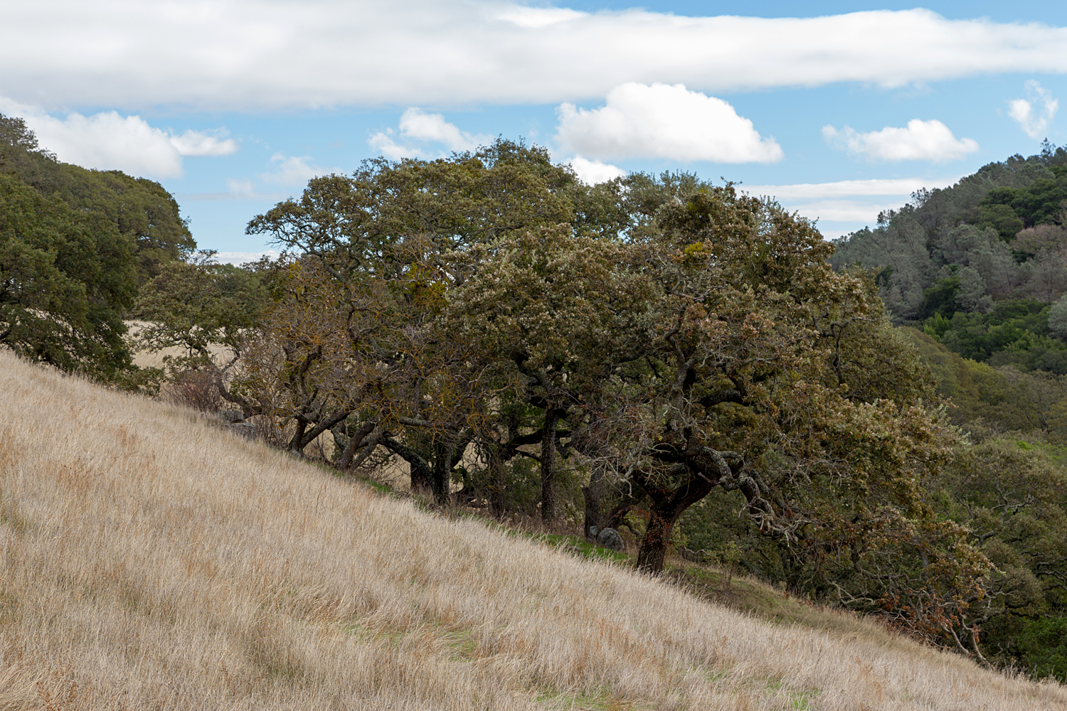 Mount Diablo State Park Curry Canyon Chase Pond Frog Pond-35.jpg