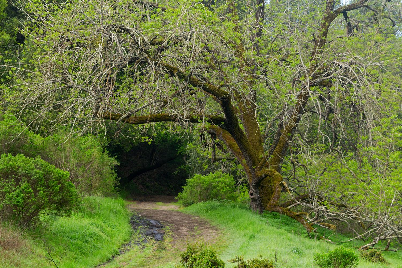 King's Canyon Loop Hike - East Bay Mud Watershed