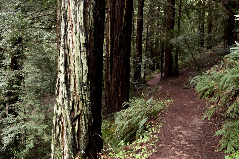 Redwood regional park french trail_-3.jpg