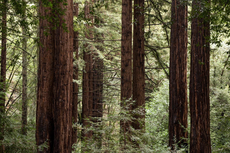 Redwood regional park french trail_-2.jpg