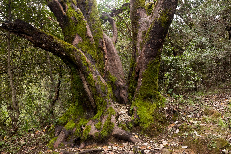 Redwood regional park french trail_-4.jpg