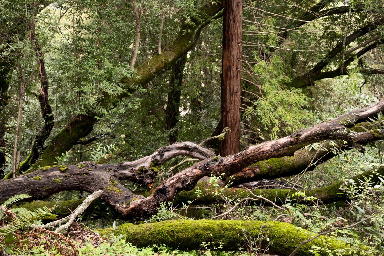 Redwood regional park french trail_-5.jpg