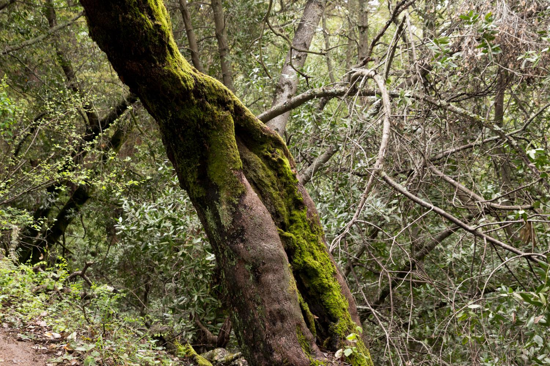 Redwood regional park french trail_-6.jpg