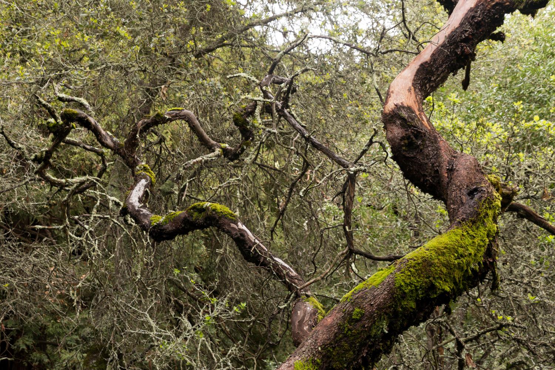 Redwood regional park french trail_-7.jpg