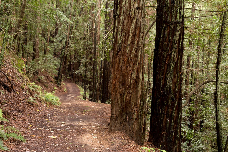 Redwood regional park french trail_-8.jpg