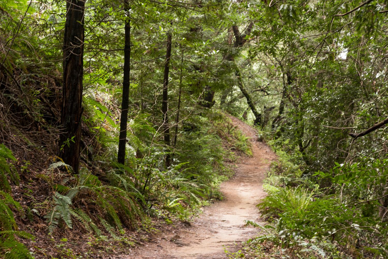 Redwood regional park french trail_-10.jpg