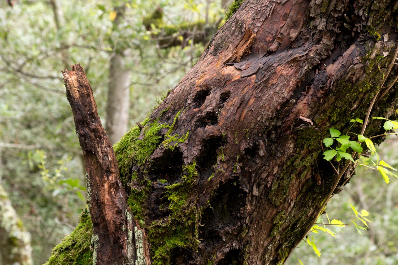 Redwood regional park french trail_-13.jpg