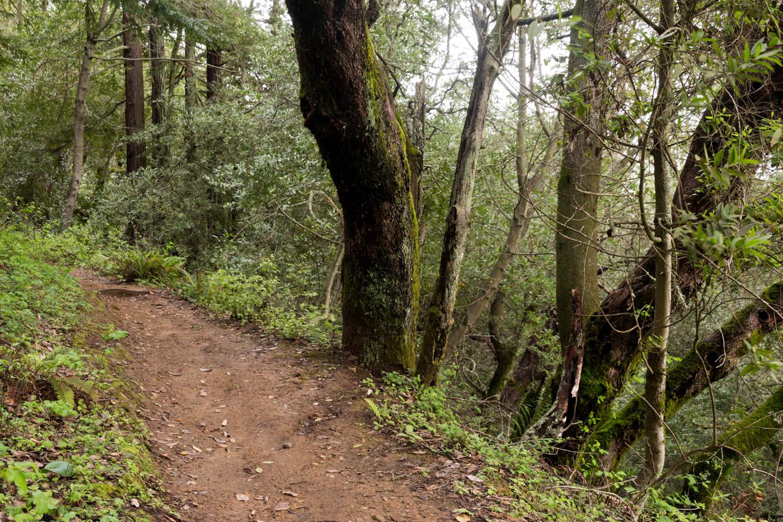 Redwood regional park french trail_-12.jpg