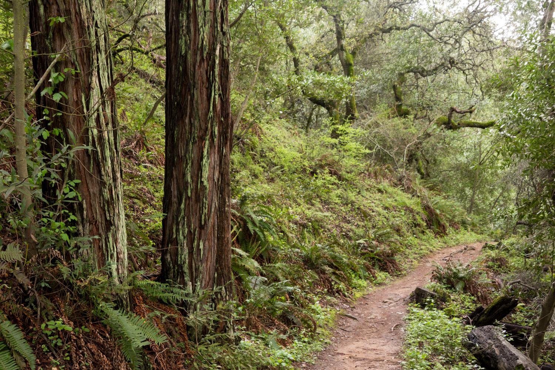 Redwood regional park french trail_-14.jpg