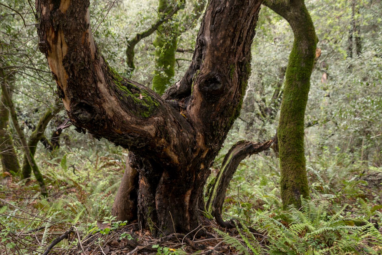 Redwood regional park french trail_-15.jpg