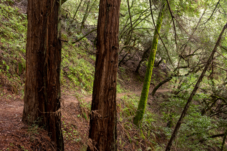 Redwood regional park french trail_-17.jpg