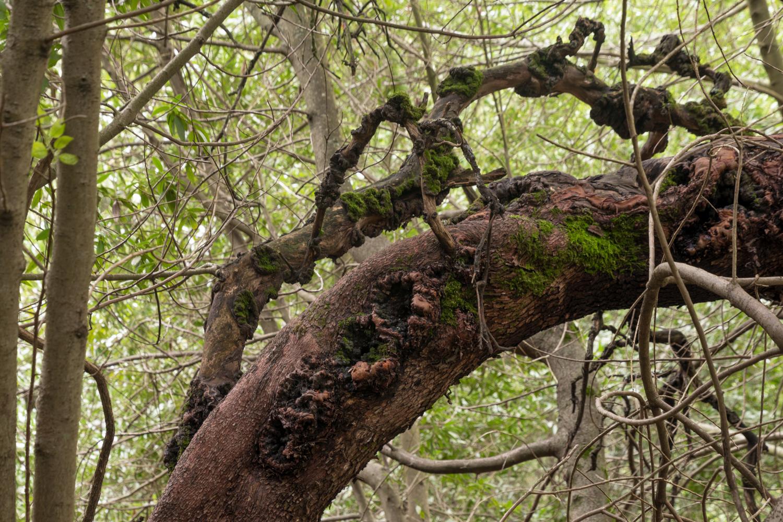 Redwood regional park french trail_-18.jpg