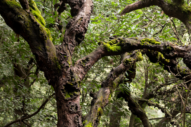 Redwood regional park french trail_-21.jpg