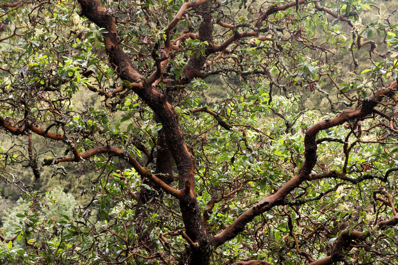 Redwood regional park french trail_-20.jpg