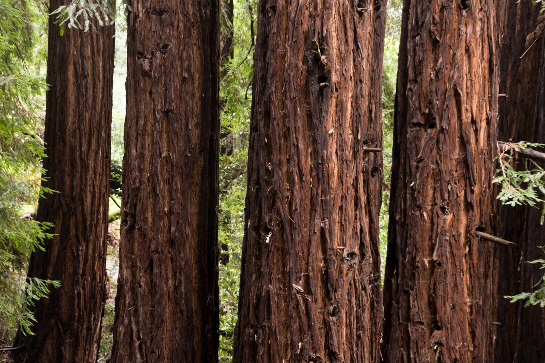 Redwood regional park french trail_-23.jpg
