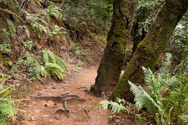 Redwood regional park french trail_-22.jpg