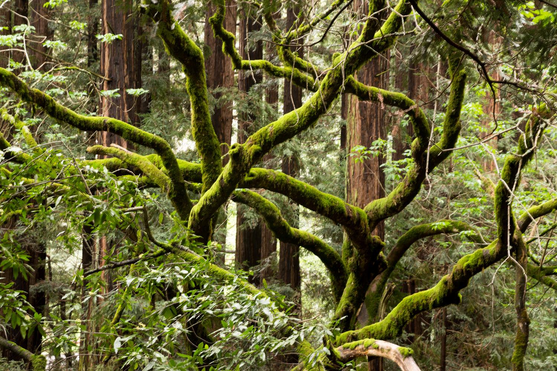 Redwood regional park french trail_-24.jpg