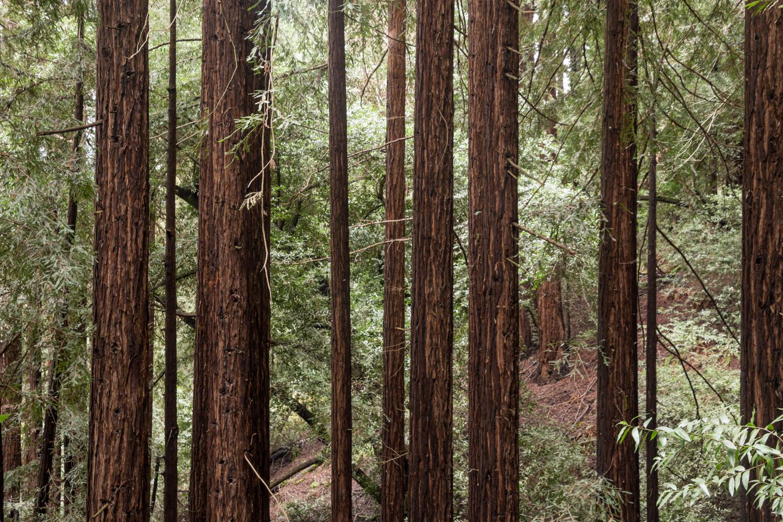 Redwood regional park french trail_-25.jpg