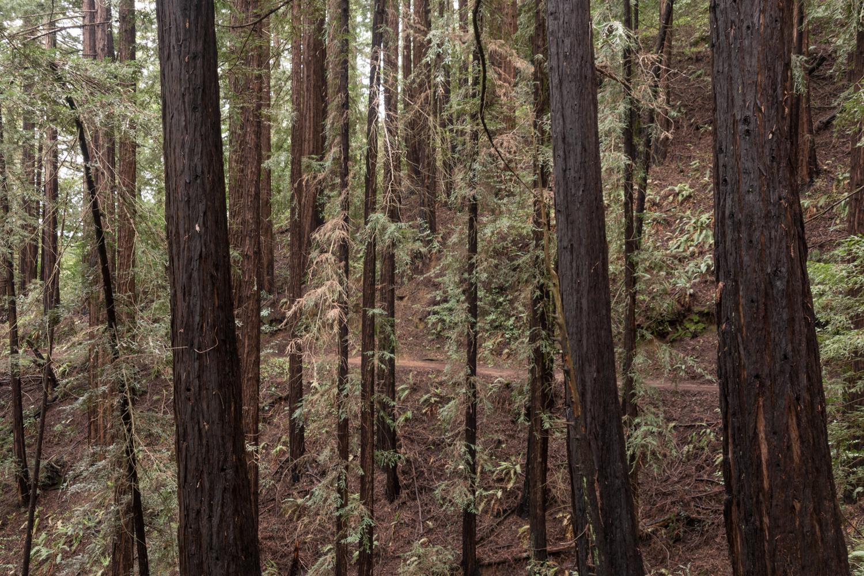 Redwood regional park french trail_-26.jpg