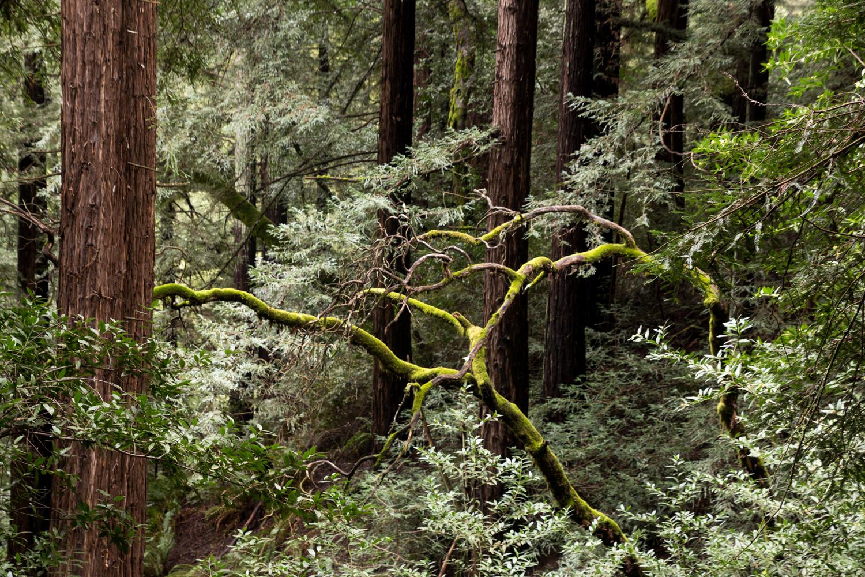 Redwood regional park french trail_-28.jpg