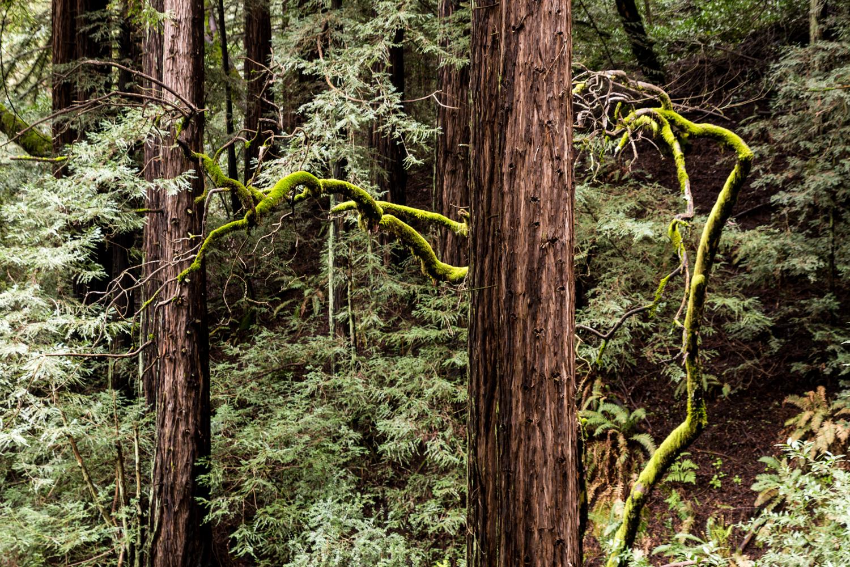 Redwood regional park french trail_.jpg