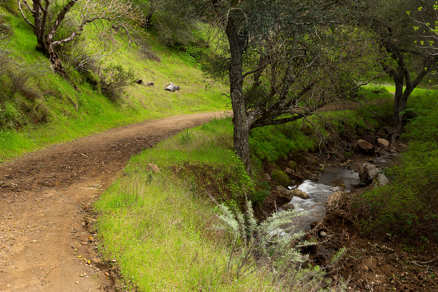 Sycamore Creek road and Sycamore Creek