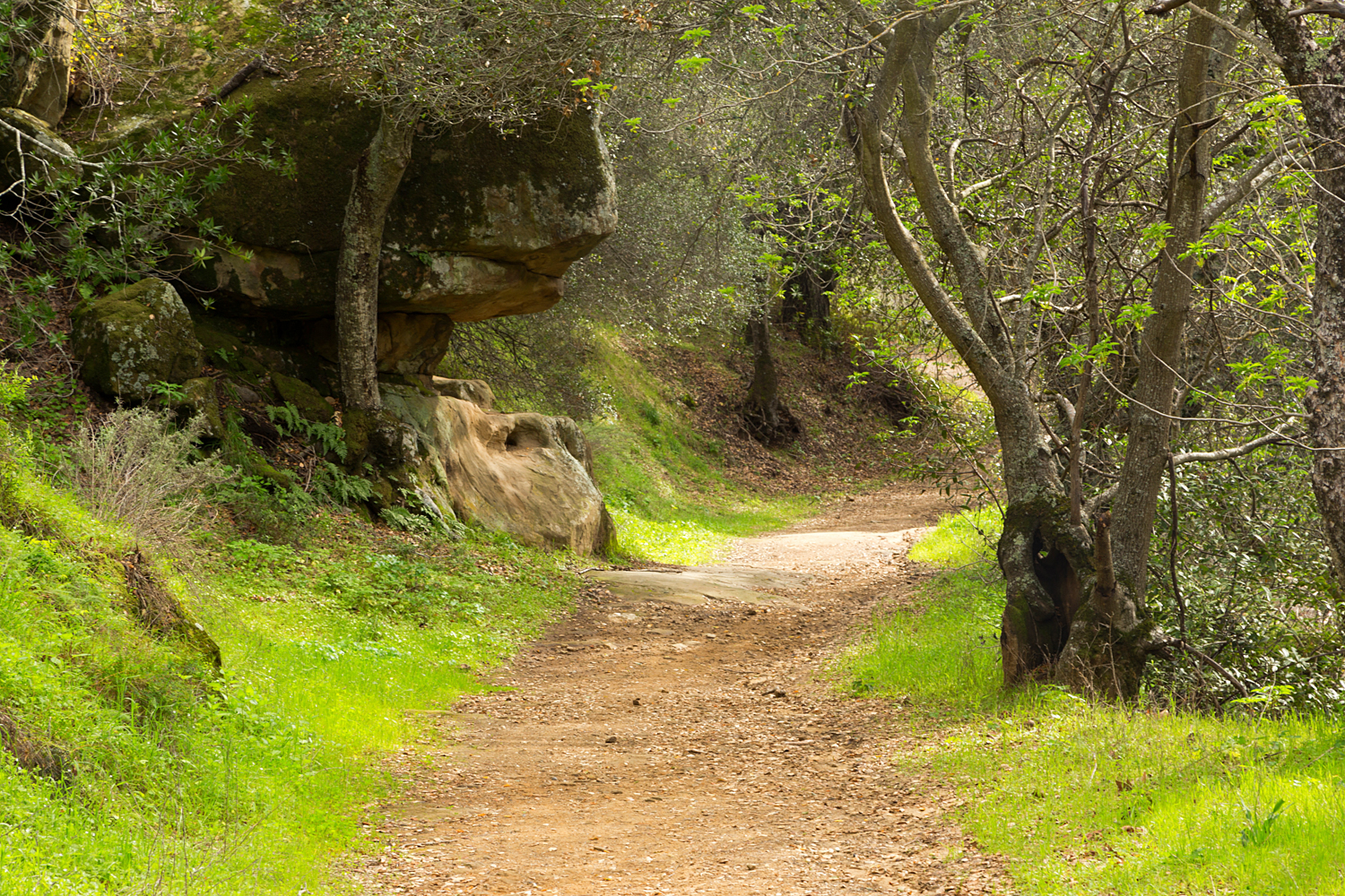 Madrone Canyon Sycamore Creek Trails-2.jpg