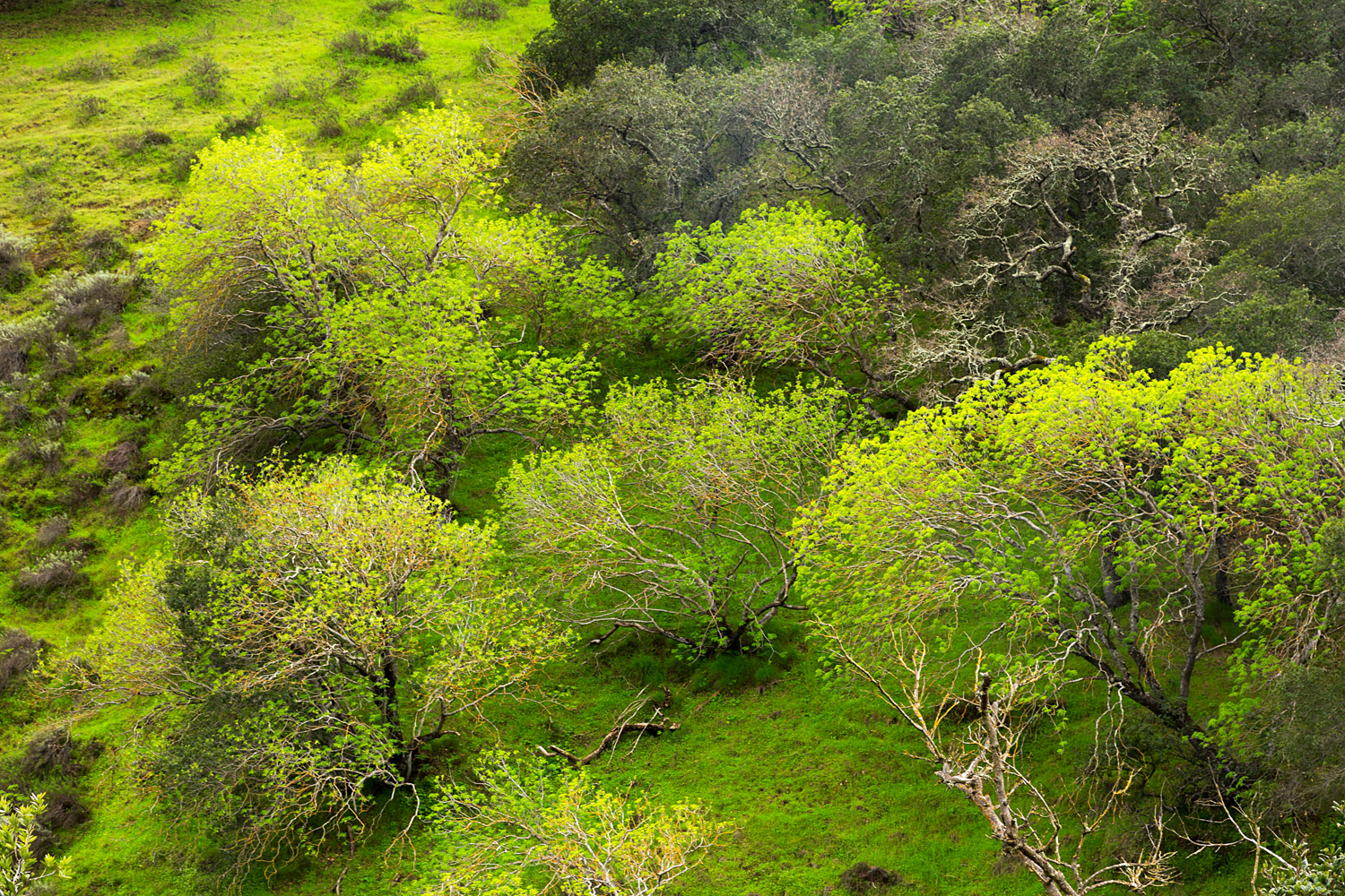 Madrone Canyon Sycamore Creek Trails-5.jpg