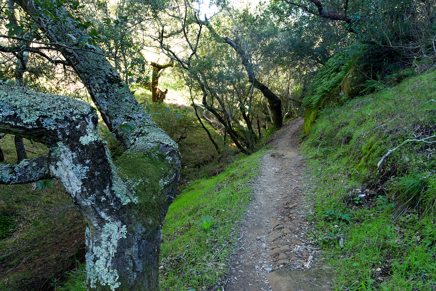 Madrone Canyon Sycamore Creek Trails-8.jpg