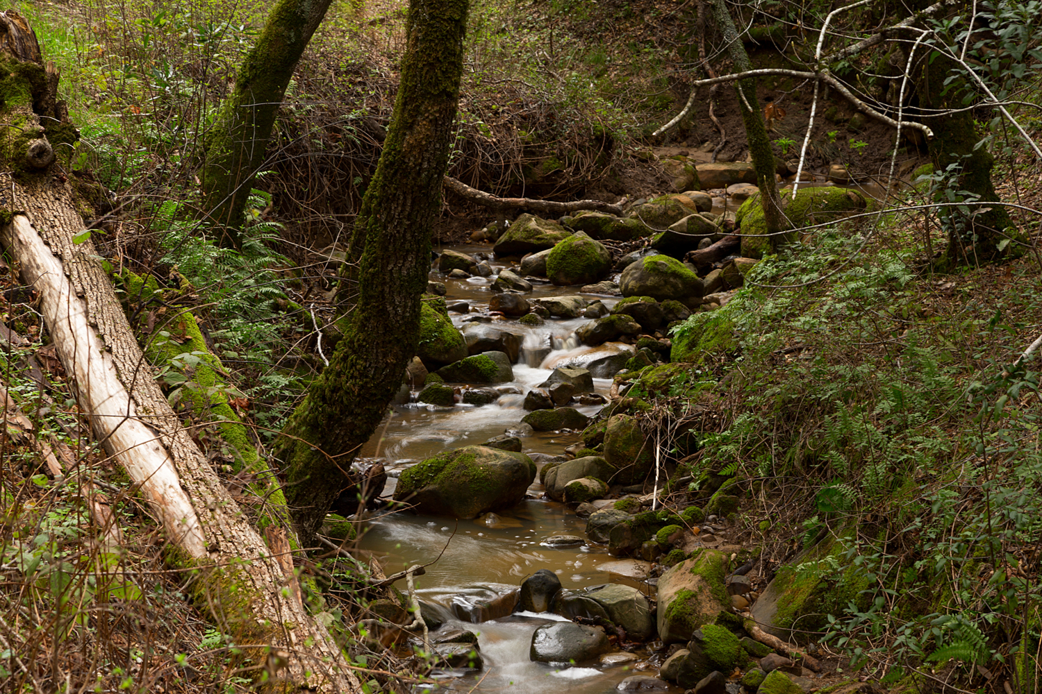 Madrone Canyon Sycamore Creek Trails-11.jpg
