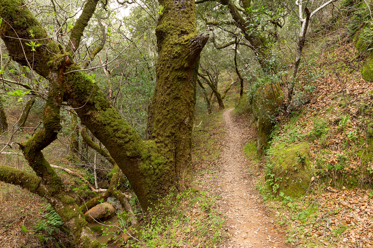 Madrone Canyon Sycamore Creek Trails-12.jpg