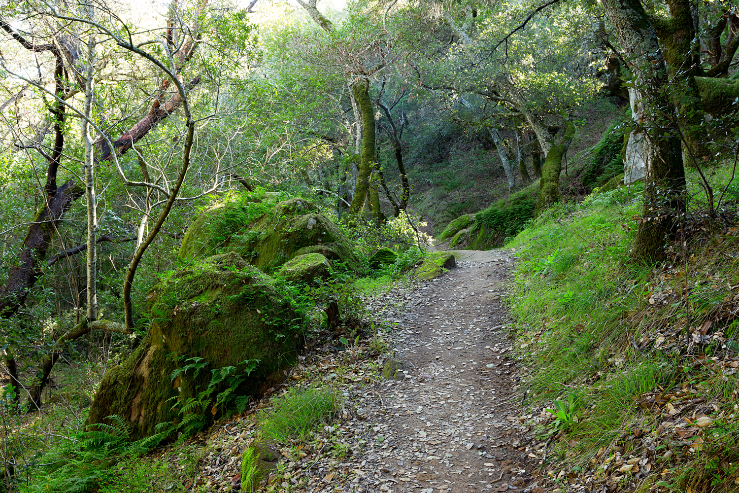 Madrone Canyon Sycamore Creek Trails-13.jpg