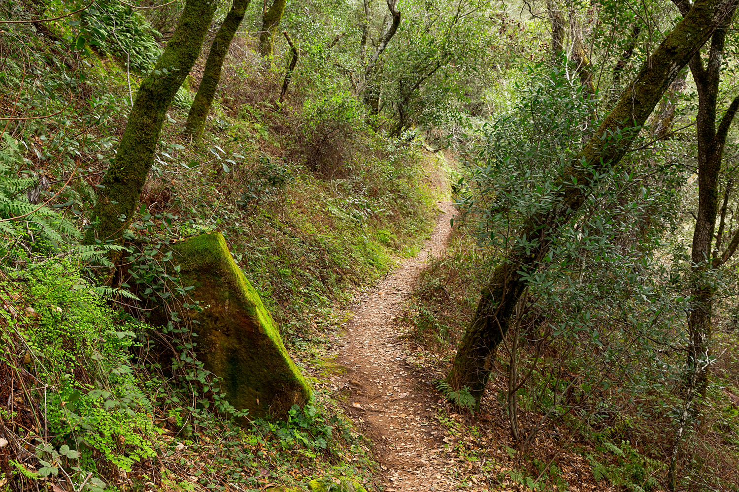 Madrone Canyon Sycamore Creek Trails-16.jpg
