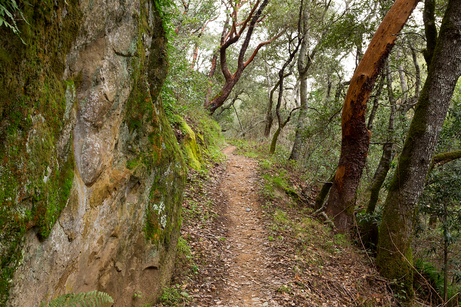Madrone Canyon Sycamore Creek Trails-17.jpg