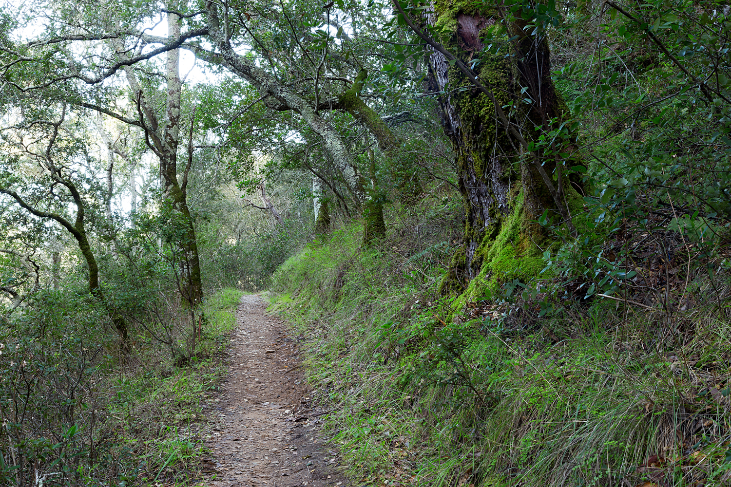 Madrone Canyon Sycamore Creek Trails-25.jpg