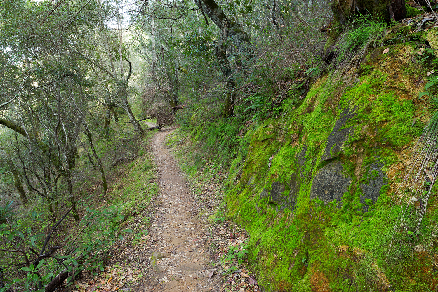 Madrone Canyon Sycamore Creek Trails-26.jpg