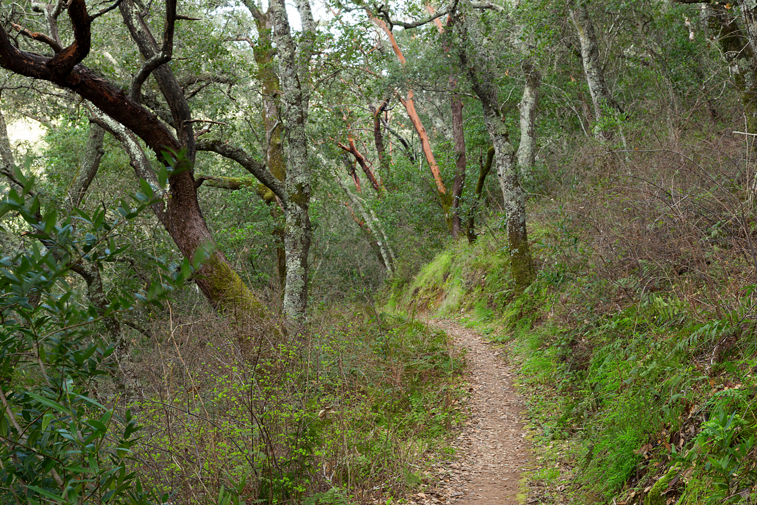 Madrone Canyon Sycamore Creek Trails-27.jpg