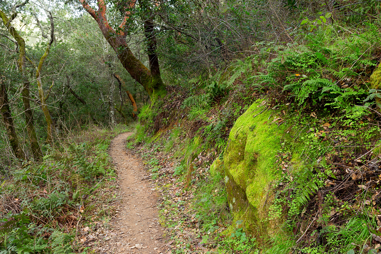 Madrone Canyon Sycamore Creek Trails-28.jpg