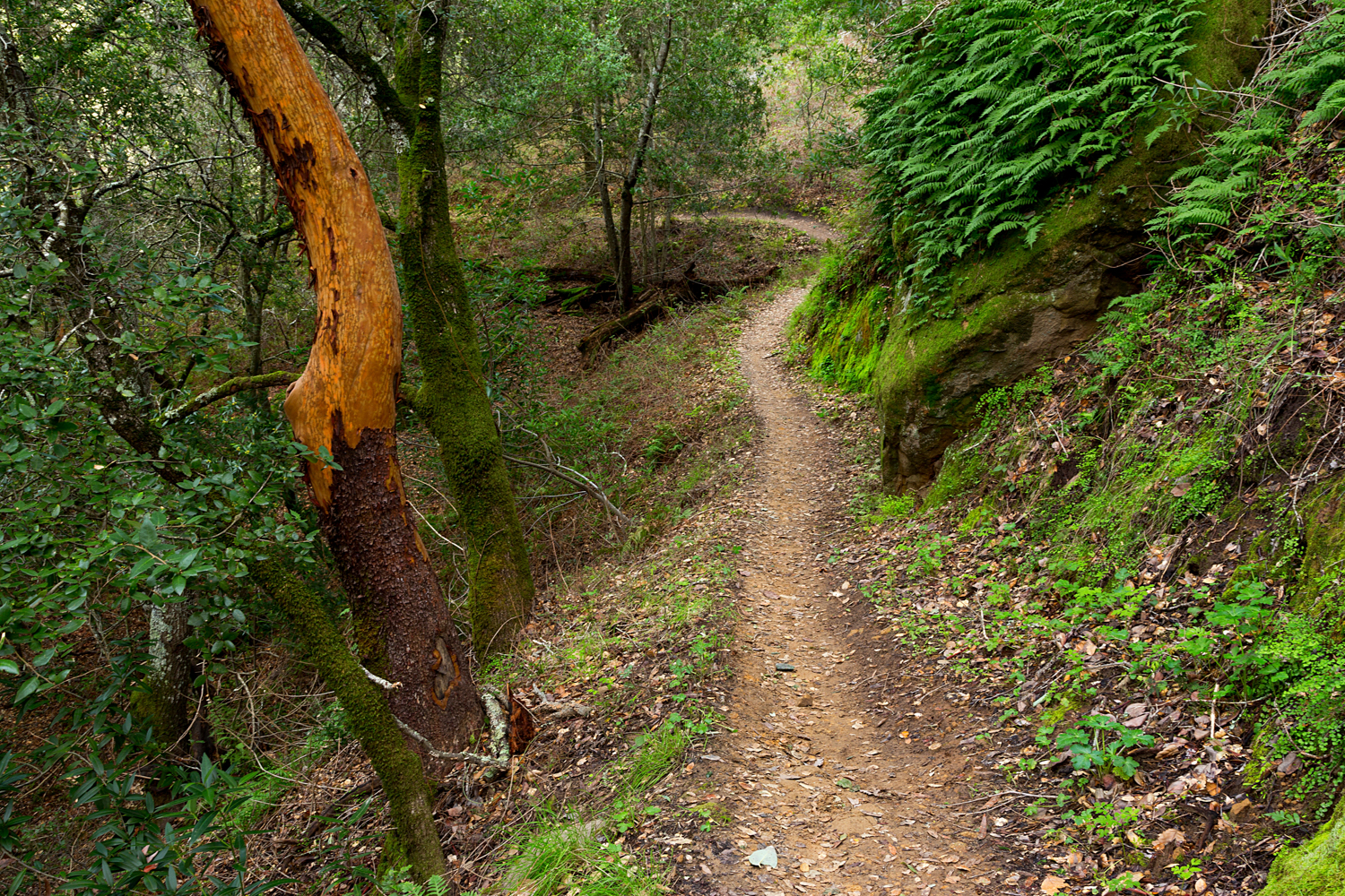 Madrone Canyon Sycamore Creek Trails-29.jpg