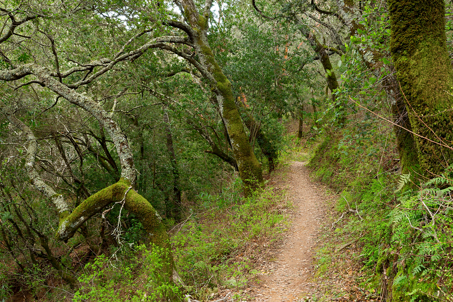 Madrone Canyon Sycamore Creek Trails-32.jpg