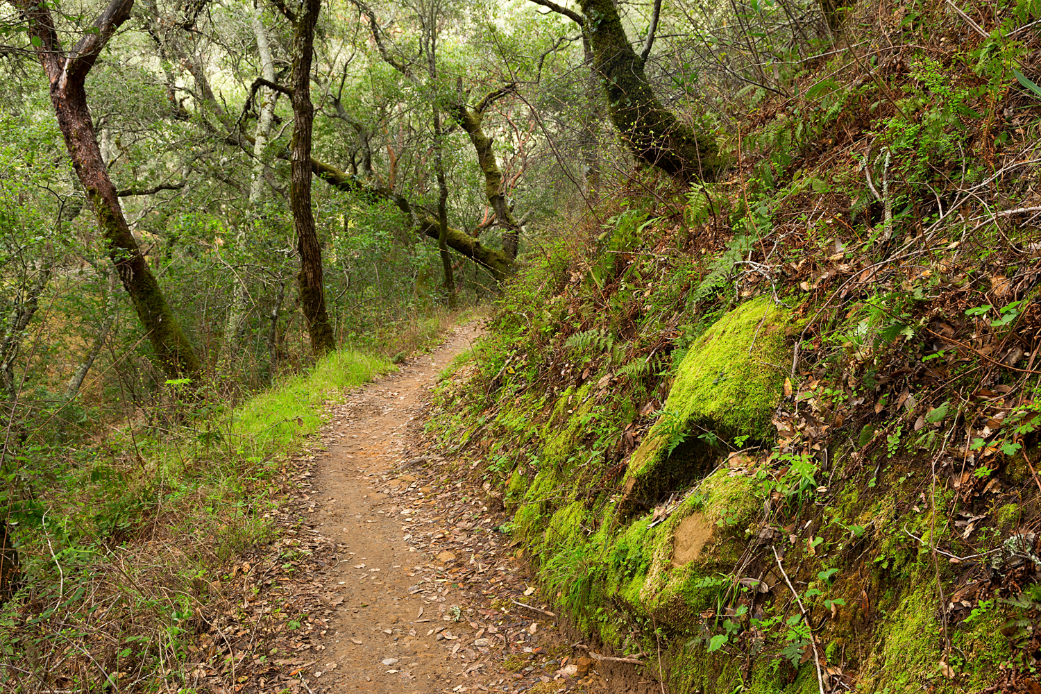 Madrone Canyon Sycamore Creek Trails-34.jpg