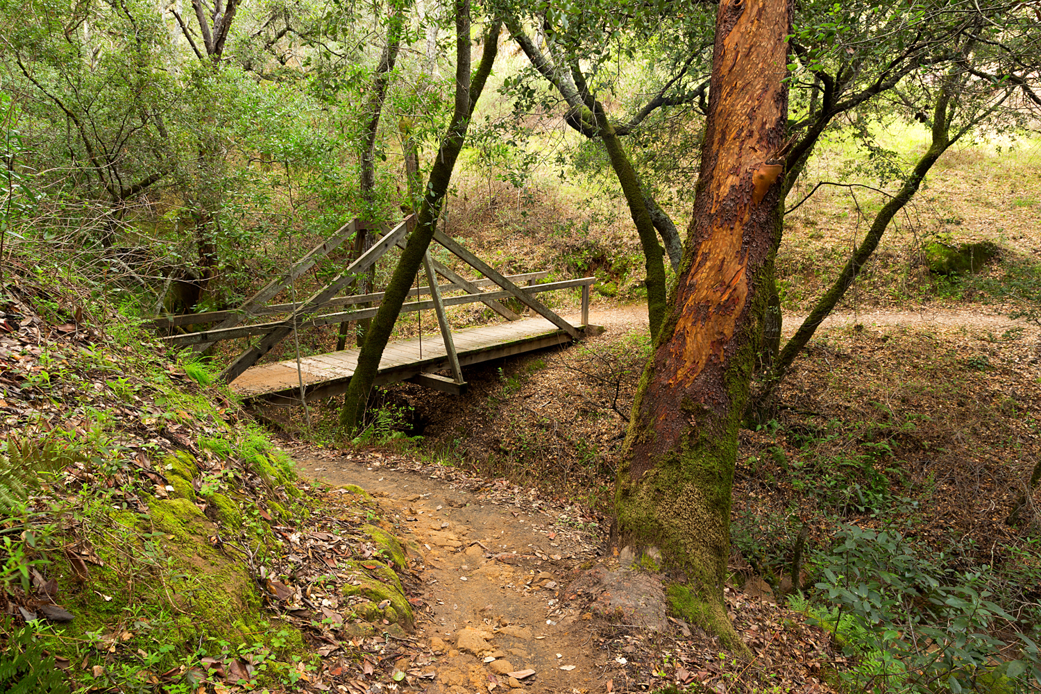 Madrone Canyon Sycamore Creek Trails-35.jpg
