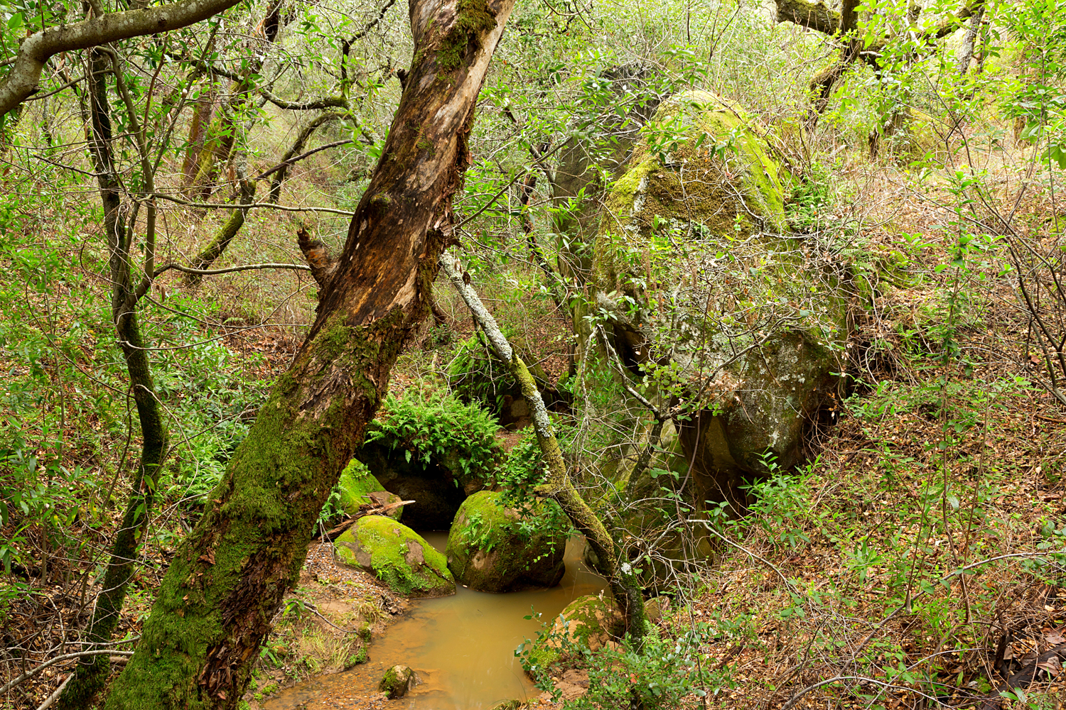 Madrone Canyon Sycamore Creek Trails-37.jpg