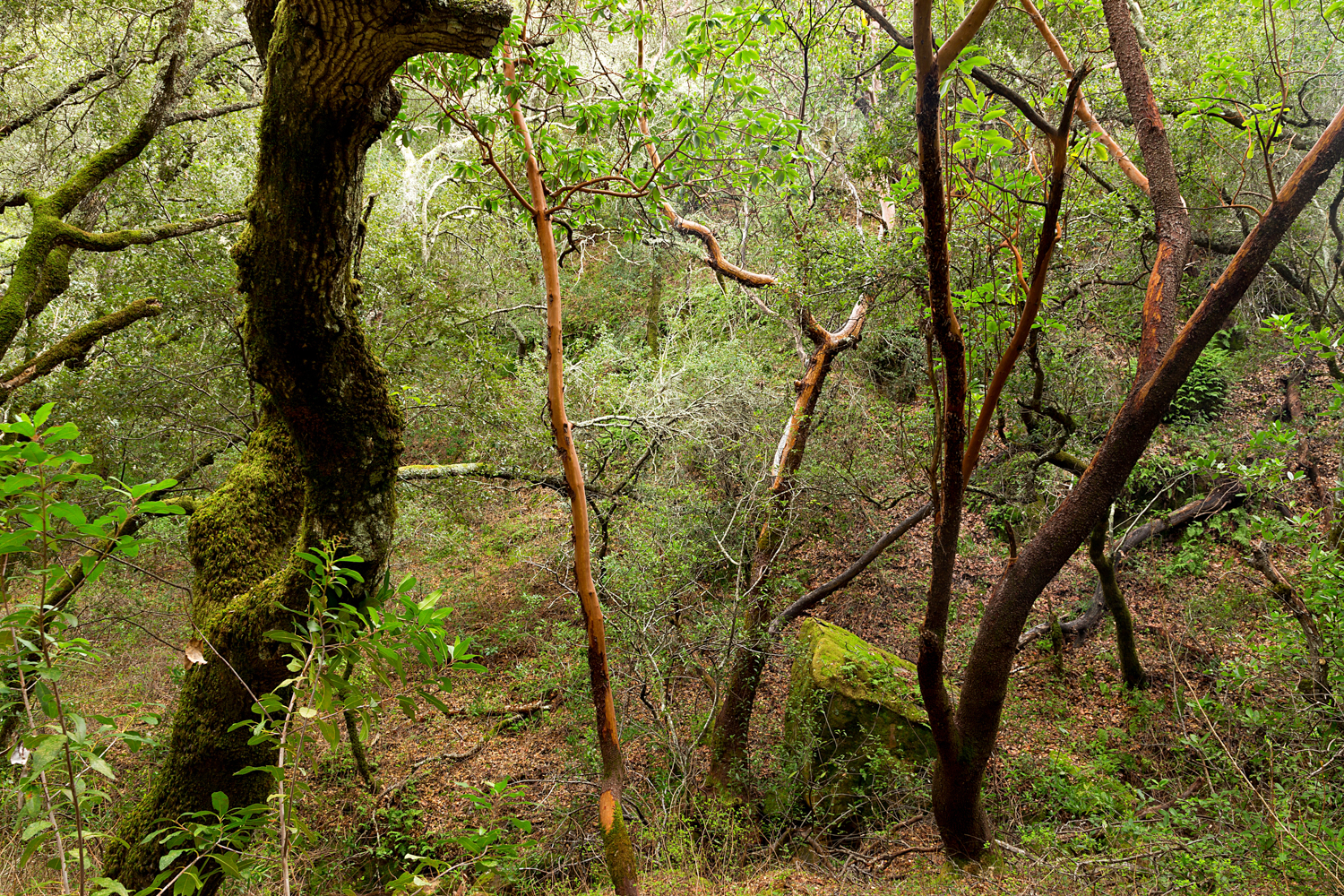 Madrone Canyon Sycamore Creek Trails-38.jpg